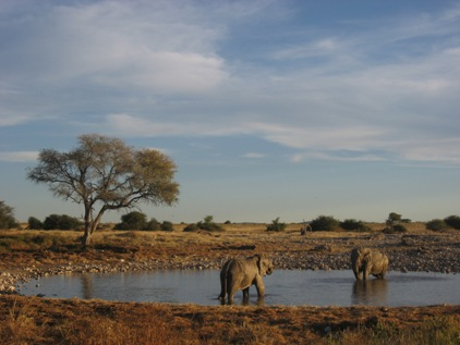 Africa!!