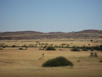Ao longe, a primeira girafa que avistamos
