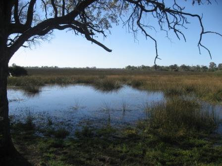 Mais Okavango