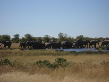Um elefante incomoda muita gente...