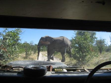 Elephant Xing