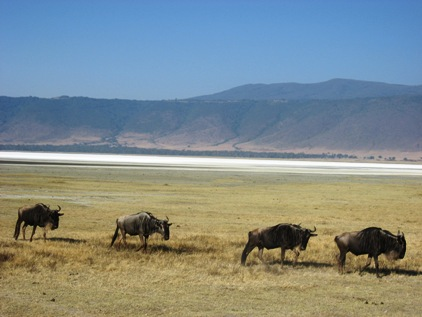 Ngorongoro 2
