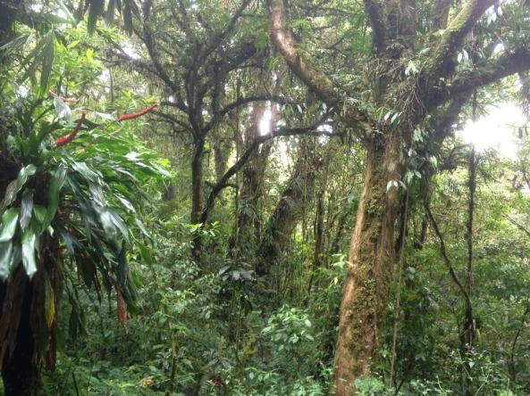 Monteverde CF