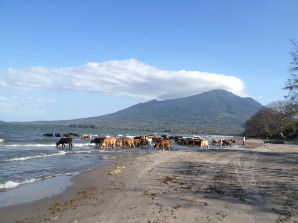 animais tomando agua e vulcão Madero ao fundo