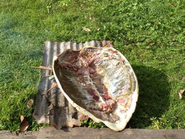 Aproveitando toda a carne