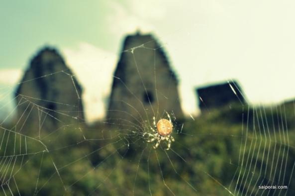 Teias e aranhas por todos os lados