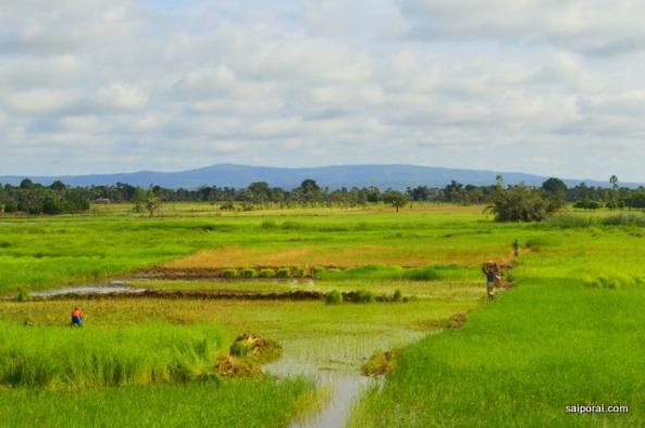 Uma das poucas regiões verdes do país
