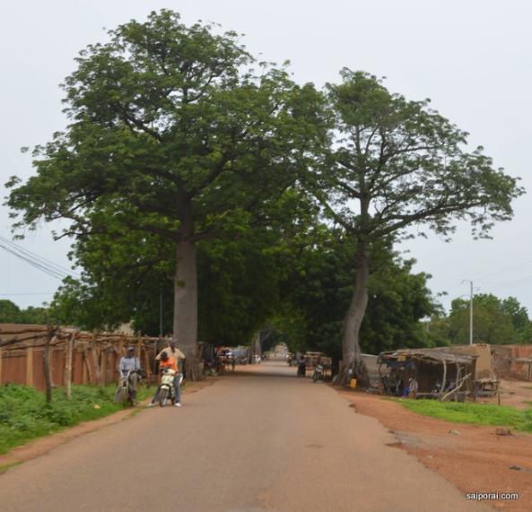 Baobas ao longo da estrada