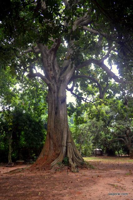 Floresta Sagrada Benim