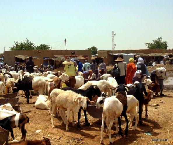 Mercado de animais de Agades