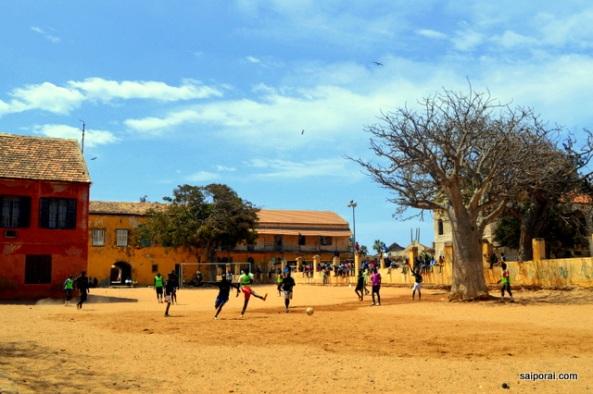 Baobá no meio do campinho